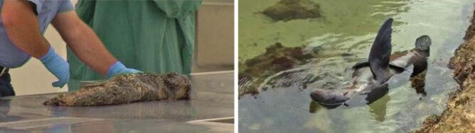 53 martwe foczki wyrzucone na ląd