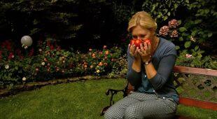 Pomidorowy ogród (odc. 488)