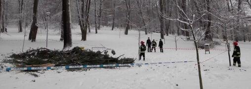 Pod ciężarem śniegu złamało się drzewo. Trudne warunki w górach i na drogach